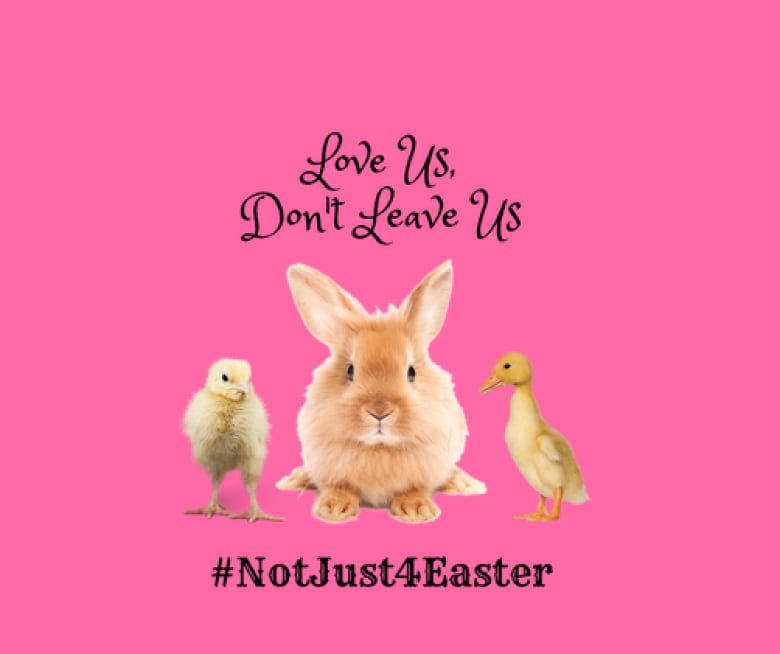 Dont buy pet rabbits for easter theyll likely end up abandoned hoppy hearts rabbit rescue is urging people to avoid buying pet animals as gifts throughout easter submitted negle Gallery