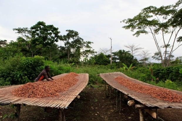 Ivory Coast Cocoa to Chocolate
