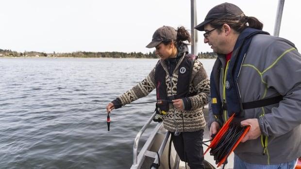 Underwater noise pollution also disturbs fish, study suggests