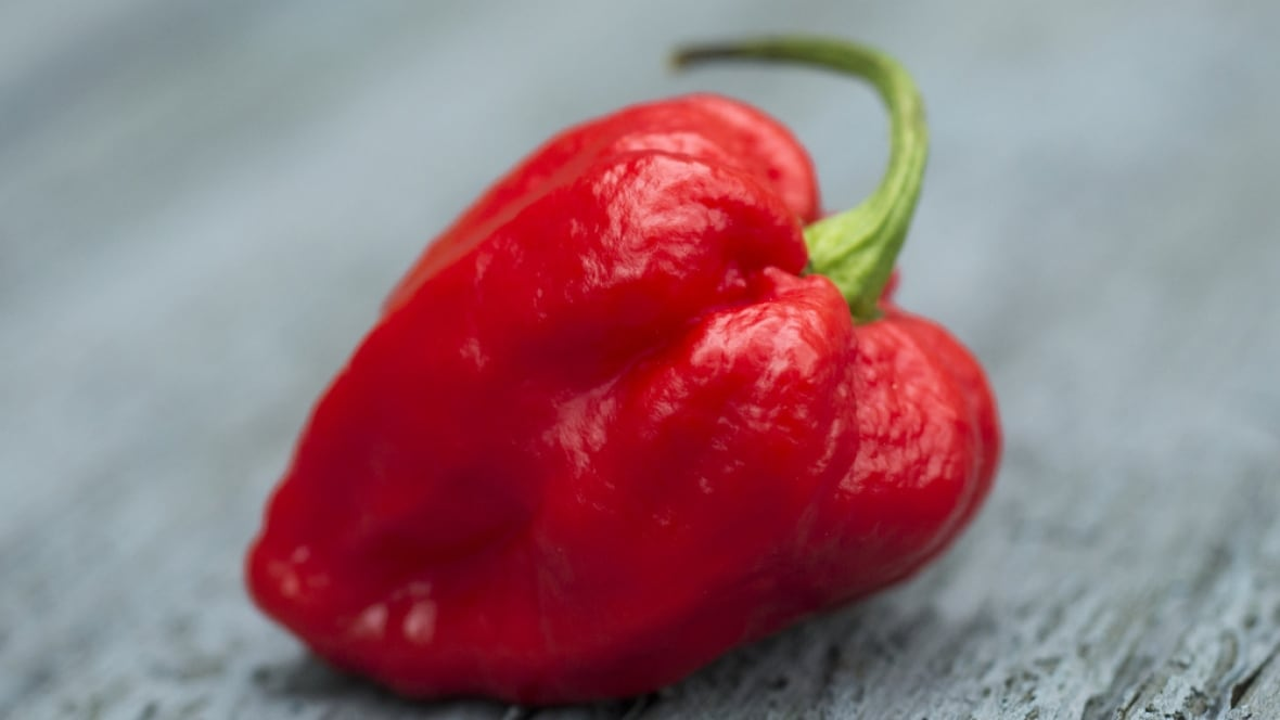 Eating world's hottest pepper sparks brain disorder, thunderclap headaches