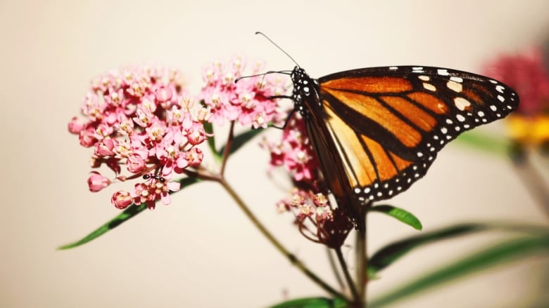 Bring On The Butterflies Your Pollinator Friendly Plant Primer