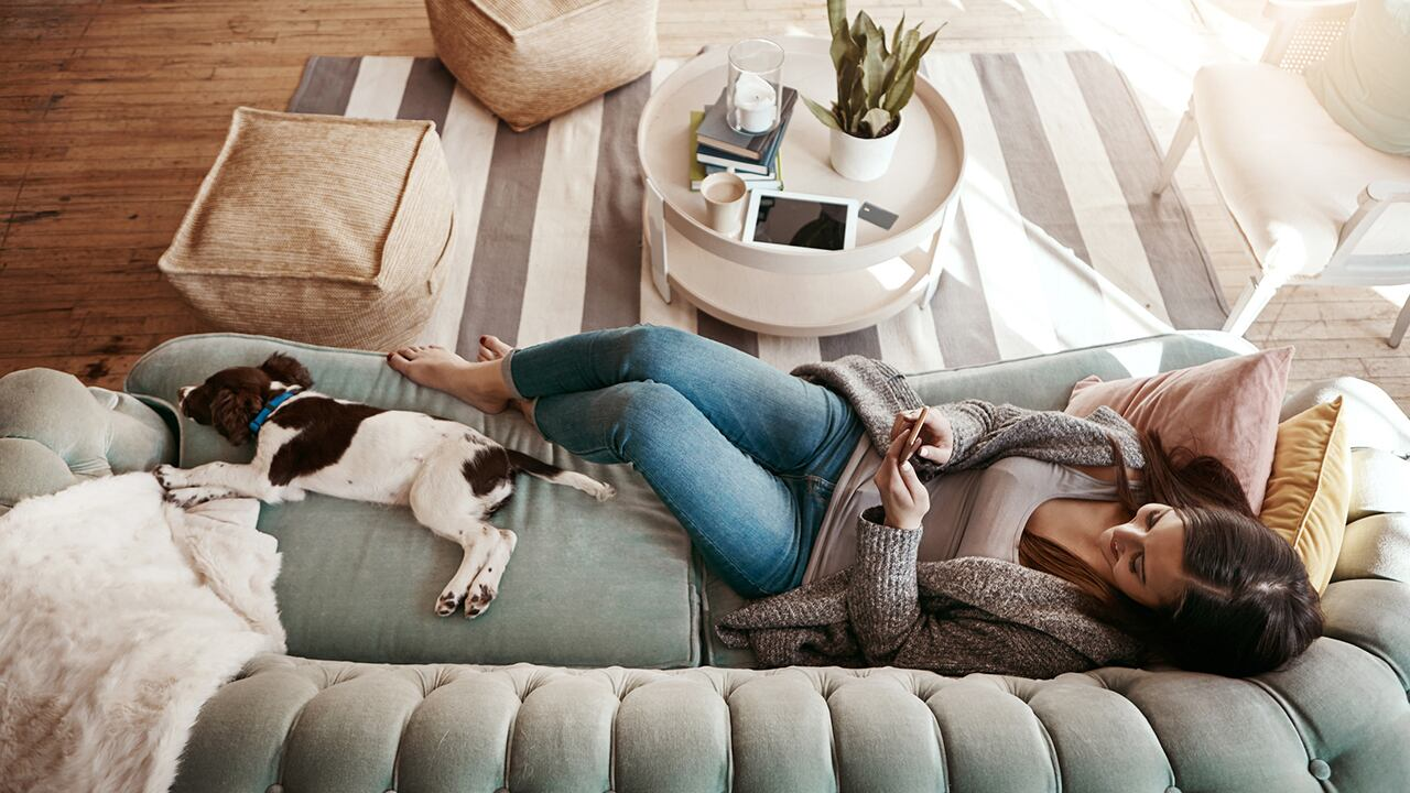 Move Over Rover How To Style Your Living Room With Animals In Mind Cbc Life