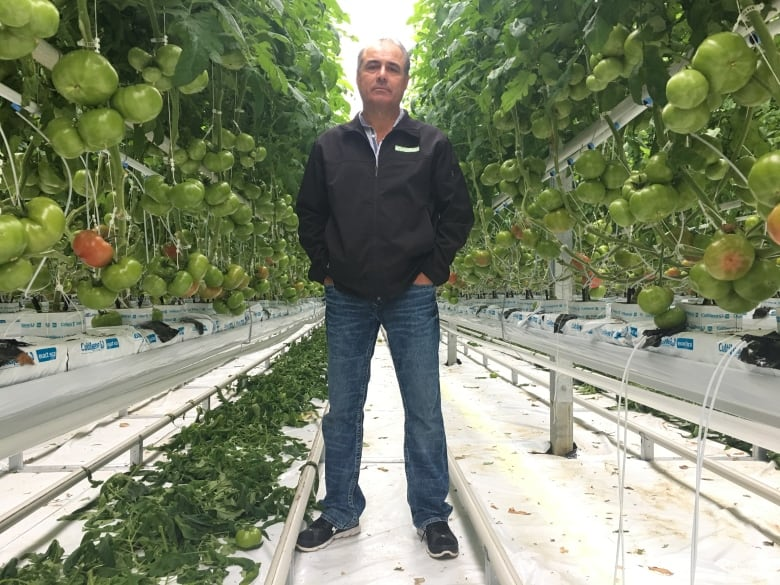 Ont. minimum wage hike forces greenhouses to think cannabis, automation