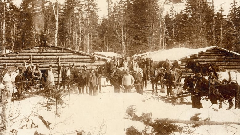 Islanders worked the New Brunswick lumber camps in the Bygone Days