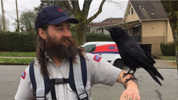 Canuck the crow is pecking everyone off — except this mail carrier | CBC Radio