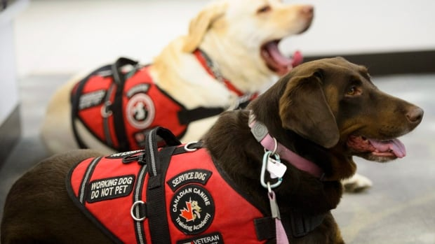 Plan To Give Service Dogs To Ptsd Veterans Rocked By