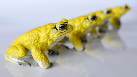 3-d printed toads by Savi