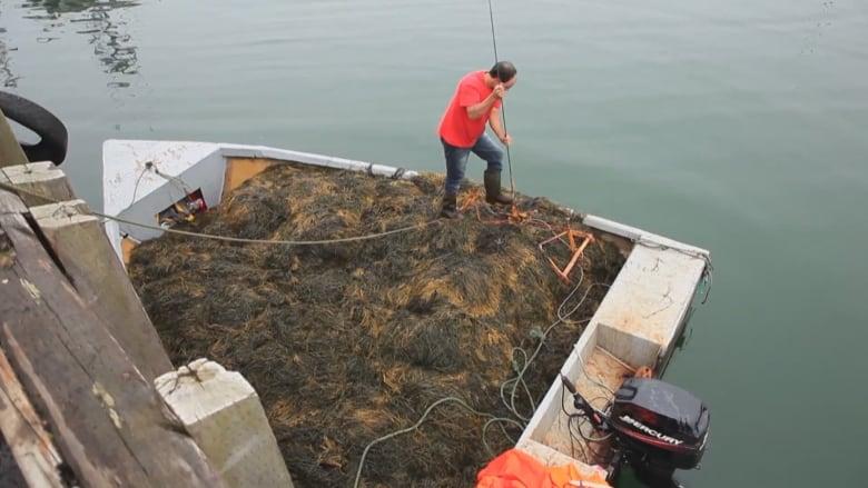 Uncertainty surrounding marine protected areas concerns N S  seaweed