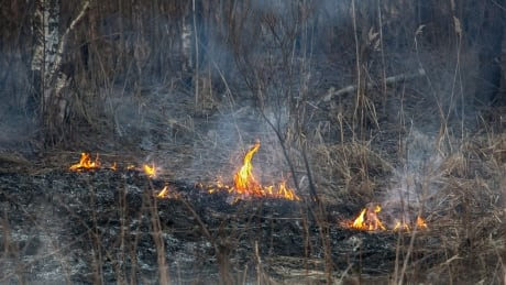 grass fire burn ban
