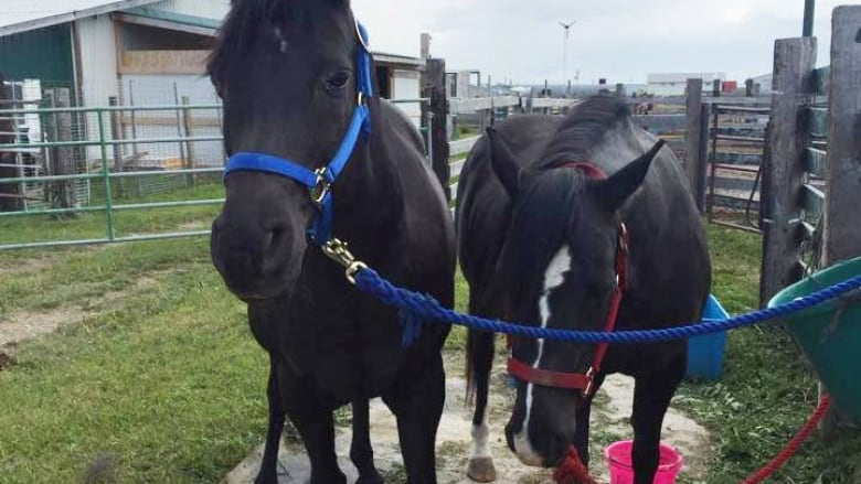 These Two Horses Cocoa And Bella Were Allegedly Taken To A Slaughterhouse Killed Without Their Owners Consent Kathy OReilly Taylor