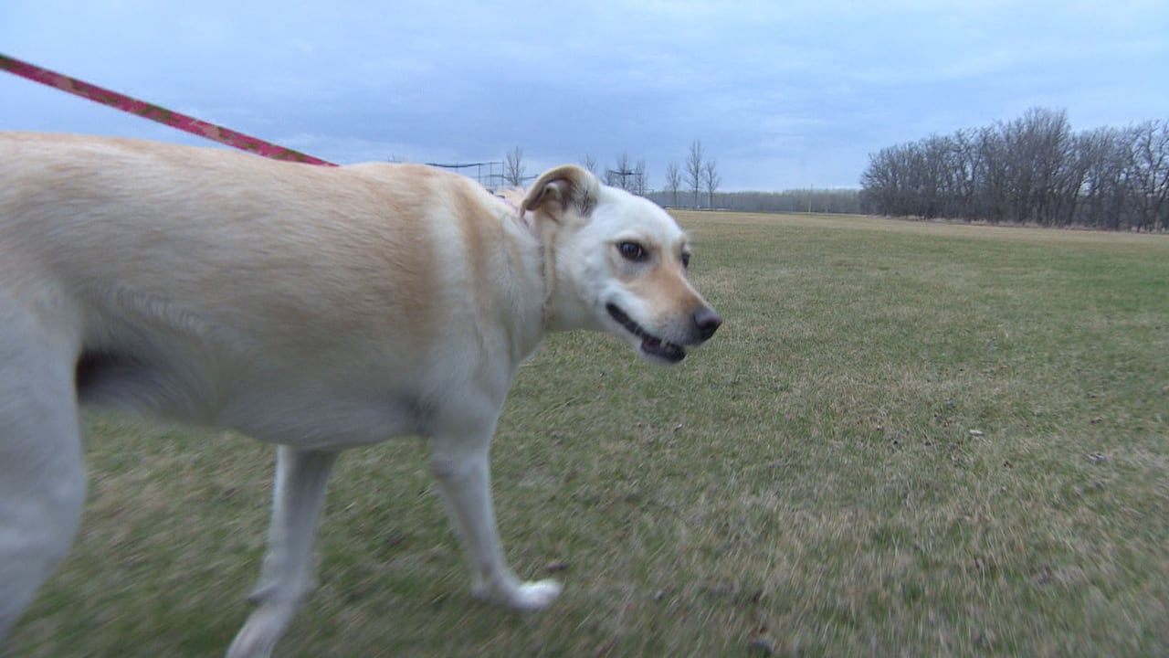 Winter dog doo causes stink, poses health risks for pets as