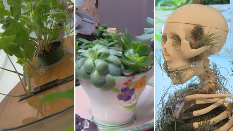 Quirky Work Terrariums A Growth Business For Couple With Passion