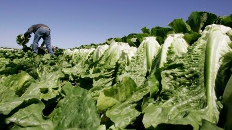 As officials give all-clear on romaine E. coli outbreak, contamination remains a mystery