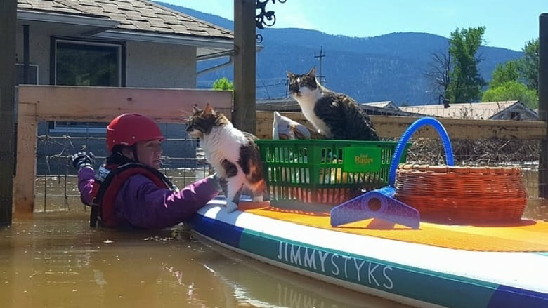 Grand Forks Cat Rescue