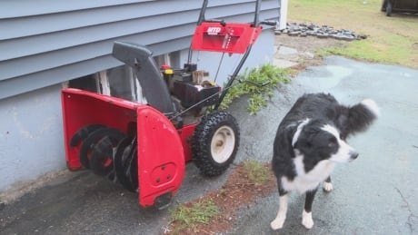 Snowblower and dog