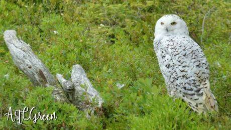 Owls, ponies, whales - all kinds of wildlife to see in our latest audience gallery