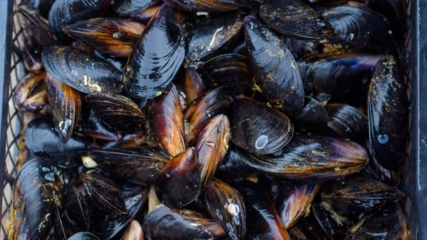 B.C.'s heat wave may be to blame for several cases of shellfish poisoning