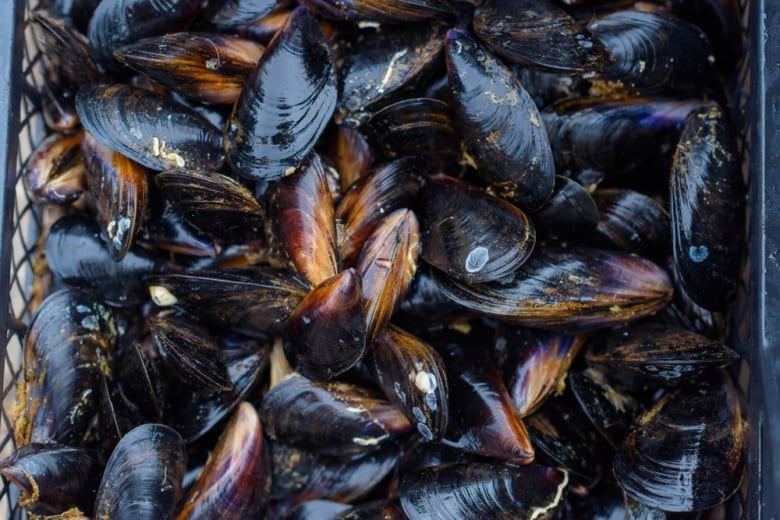 Mussels in Puget Sound have tested positive for opioids and antibiotics
