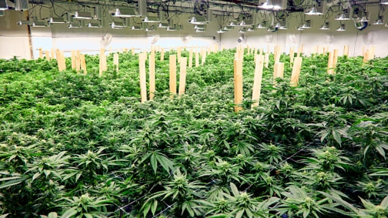 Phenomenal Marijuana Bill Inches Closer To Passage With House Vote Download Free Architecture Designs Scobabritishbridgeorg