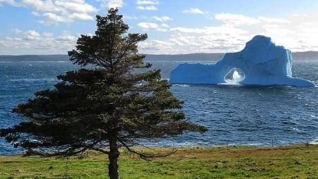 Upper Ahmerst Cove iceberg