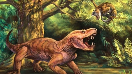 'Monstrous' sabre-toothed fossils from Russia shed new light on mammal history