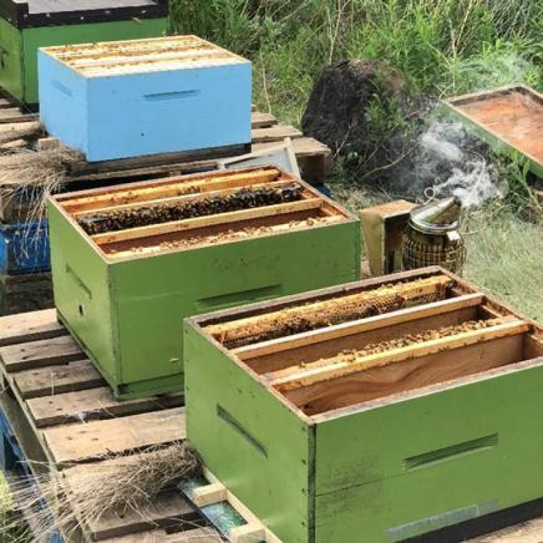 Industrial apiary hostile environment sexual harassment