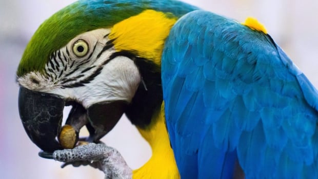 Parrot Adoption 20180610