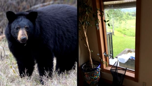 Smithers, B.C., man wakes to find adult bear in his living room | CBC News