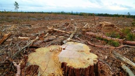 New Brunswick clear cut