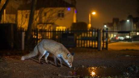 Mammals adopt nightlife to avoid contact with humans, study finds