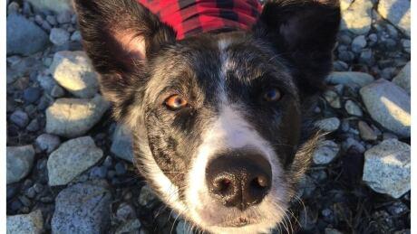 'I've done a bad thing': Dog's tragic death shatters B.C. island paradise