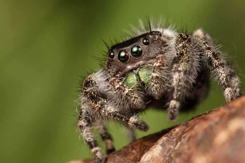 When it comes to spiders in Alberta, you have lots to love