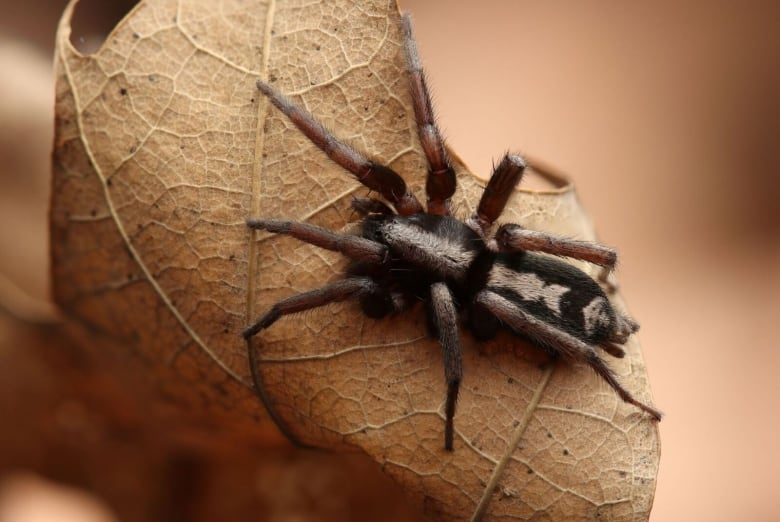 Afraid Of Spiders A New Rom Exhibit Says There S No Need To Be So