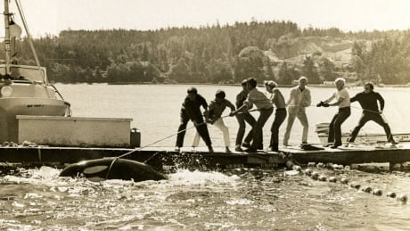From commodity to cared for, B.C. historian charts region's relationship with orcas