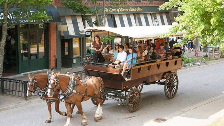 animal rights group calls for ban on p e i s horse drawn carriages