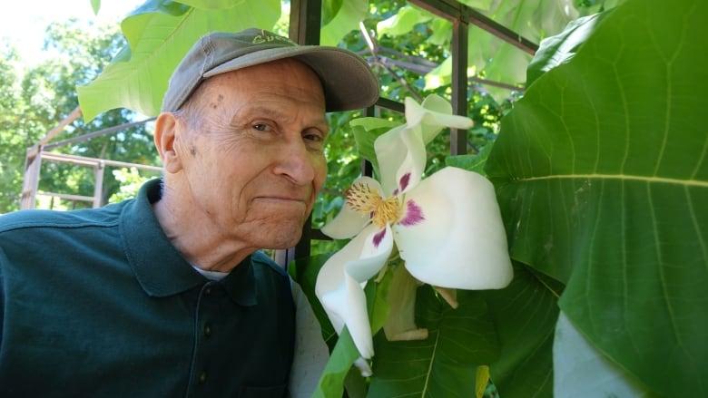 Steel Magnolia Florida Native Thriving In Ottawa Man S Garden