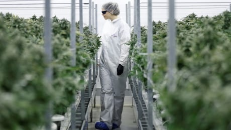 Constellation Brands invests $5B in Canopy Growth