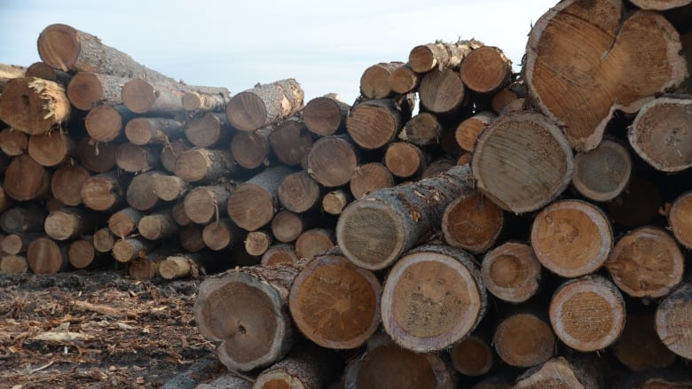 U S  softwood duties harder to 'swallow' for northern