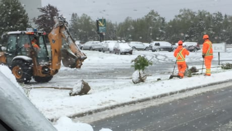 Town of Gander workers planting trees in the snow June 26