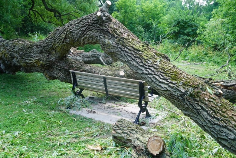 this huge tree in gibbons park fell on 2 people and they walked away