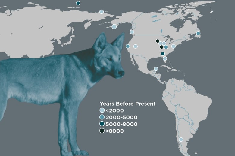 Native Dogs of the Americas Were Wiped Out by European Colonization