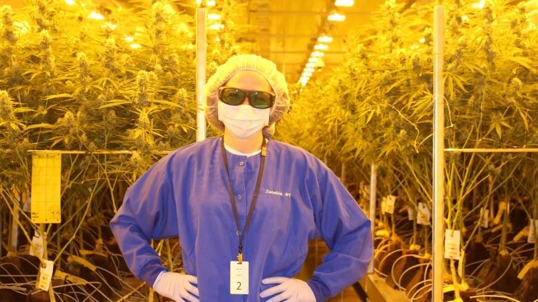 9d0532278183 CBC reporter Tori Weldon gets a tour of the Zenabis cannabis facility in  Atholville