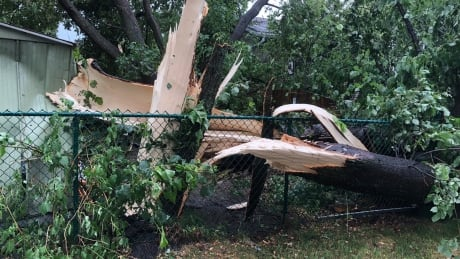 Brief but intense storm causes damage to trees and property, roads and vehicles thumbnail
