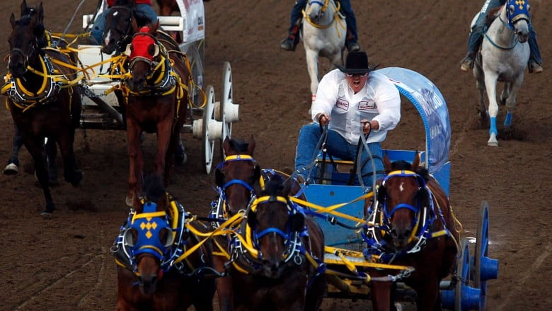 Every Horse Can Only Race Once At The Calgary Stampede Per