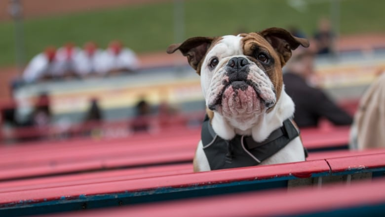 Vancouver Canadians Dog Day