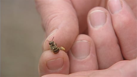 costco asks suppliers to drop neonicotinoids in effort to save bees
