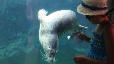 Camrose the seal at Assiniboine Park Zoo in Winnipeg