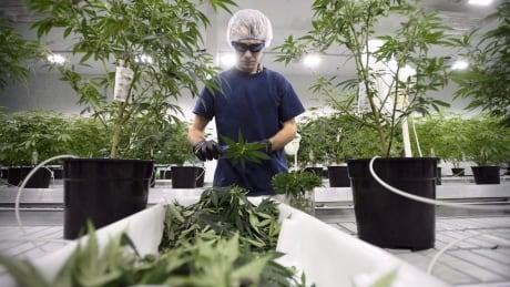 Pediatricians need more information on medical marijuana for kids, study says
