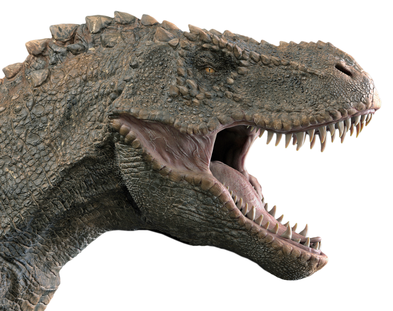 Why Do Predatory Dinosaurs Have Eyes On The Sides Of Their Head Cbc Radio