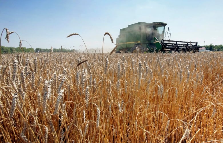 Here's what 50 years of food supply data says about Canada's